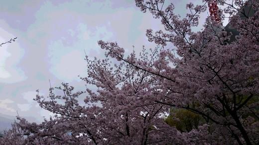 靭公園 桜�A.JPG