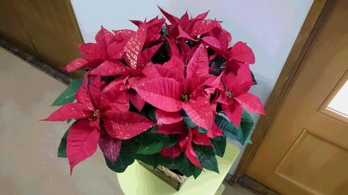 12.5 クリスマス.JPG