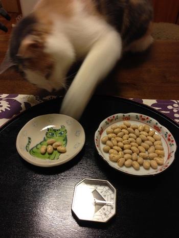 2015年ハナの豆.JPG