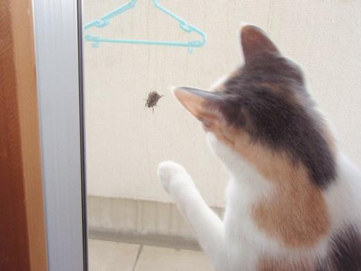 昆虫とハナ 004.jpg