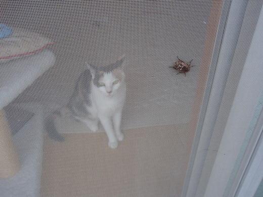 昆虫とハナ 008.jpg